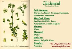 Chickweed Magical Properties - The Magical Circle School - www.themagicalcircle.net