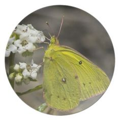 Yellow Butterfly on Wildflower Decorative Plate from Florals by Fred #zazzle #gift
