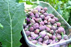 Sprouts, Vegetarian Recipes, Cabbage, Vegetables, Garden, Hobbies, Alcohol, Garten, Lawn And Garden