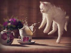 Multe lucruri par înfricoşătoare când încă eşti tânăr..., 17 poze cu pisici realizate la momentul potrivit - (Page 5)