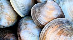 Our essential guide to cleaning clams is packed with tips that will ensure grit-free clams. Learn how to get sand out of clams and cook them to perfection. How To Clean Clams, Sea Clams, Coast Restaurant, Cleaning Clams, Steamed Clams, Crab Boil, Fruit Benefits, Le Diner, Salsa Recipe
