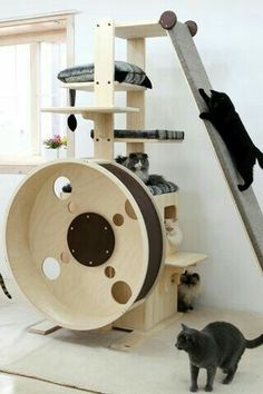 Cats Toys Ideas - looloo The slant wall - I think Ill build one. once we leaned a queen size mattress against a wall and our cat just walked up the side - it was so weird and funny looking! - Ideal toys for small cats Diy Cat Tree, Cat Playground, Playground Design, Indoor Playground, Ideal Toys, Cat Enclosure, Cat Condo, Cat Tree Condo, Unique Cats
