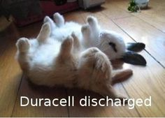 Duracell-discharged