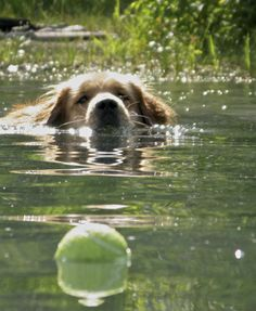 I want that ball....now!