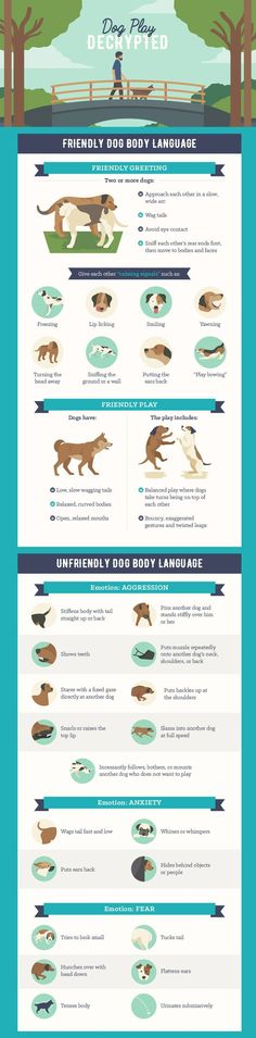This is the best legit description of canine body language I have ever seen on social media!!