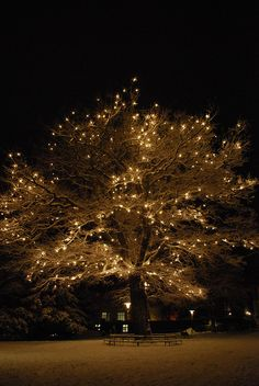 tree with white lights