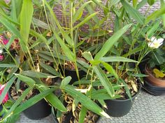 Product Page, Plants, Bamboo, Plant, Planets