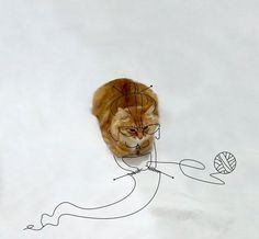 A simple photo of a cat served as the creative muse for countless online artists. Click through to see where the world's creativity can take this little kitty… [via bp]
