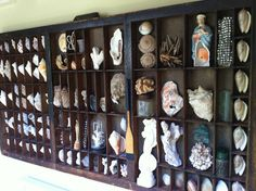 Must get printers shelf and display all MY shells!