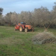 Calling it a day on the #olive #harvest and #gathering up the 300 kilos we harvested in the trusty #fiat tractor. @perennialplate we're 30 trees down only 300 more to go! #visituscania #farming #igersitaly #nofilter #nofilterneeded