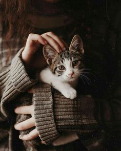 Cats become more affectionate once they fully mature - maybe a year or so. She is now two years old, and she is still very affectionate. Animals And Pets, Baby Animals, Cute Animals, Crazy Cat Lady, Crazy Cats, Cute Cats, Funny Cats, Cat Emoji, Cat Reference