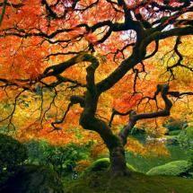 Portland Japanese Garden, Portland, OR - by ahp_ibanez181