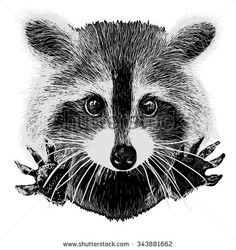 Stock Images similar to ID 205381654 - cartoon raccoons. outline...