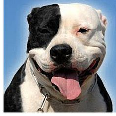 This stray pitbull saved a woman and her child from a knife yielding attacker.