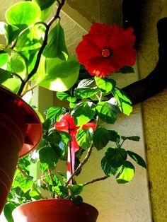Piros hibiszkusz Stuffed Peppers, Vegetables, Plants, Stuffed Pepper, Vegetable Recipes, Plant, Stuffed Sweet Peppers, Veggies, Planets