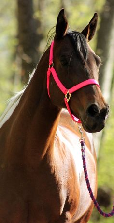 my horse will absolutely have a neon pink halter...even if its a boy