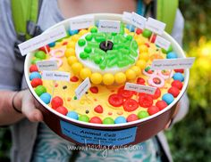 Biology Projects - 3d cell nucleus | Animal Cell Project Edible http://5perfectimperfections.blogspot.com ...