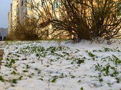 Зима в права свои вступила, Морозец в гости пригласила, Снежком наш двор припорошила, И внучку за нос прихватила!  Зима играла с нами в прятки! Мочила головы и пятки, И были взятки с неё гладки, Когда дождями шли осадки...  Но время, всё ж, неумолимо, Дожди прошли неотвратимо! А мы ступали луж всех мимо, Их обходя, неутомимо...  И дождались! Хвала надежде, Что теплилась, и как и прежде, Меняя лишь цвета в одежде, Живёт в учтивом и в невежде...!  #стихи #Долгопрудный #зима #город #поэзия…