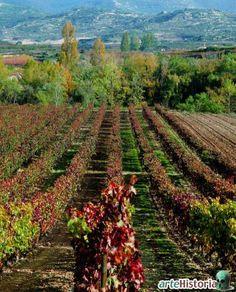 Each year in September, I miss the viñedos en otoño (not in La Rioja, but P. de Alicante) vineyards in autumn