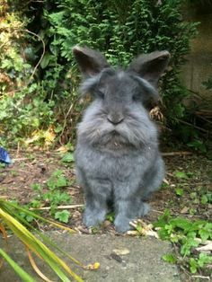 """""""To defeat carrot, you must become carrot."""" says Sensei Rabbit.This rabbit looks like a little old man. Cute Creatures, Beautiful Creatures, Animals Beautiful, Baby Animals, Funny Animals, Cute Animals, Funny Bunnies, Cute Bunny, Adorable Bunnies"""