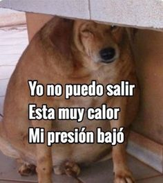 Here are the 35 Best Animal Memes funny & cute pics over the year of Dogs, Cats, Birds & Funny Animal Memes, Cat Memes, Funny Animals, Funny Memes, Jokes, Meme Pictures, Reaction Pictures, Meme Pics, Pablo Vitar