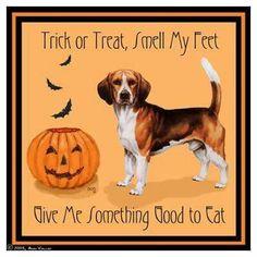 Beagle feet smells.. I'll give him a treat