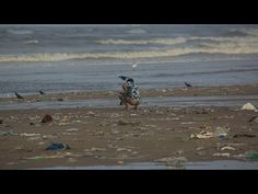 Pooping on the beach in India - vpro Metropolis Slums, Video News, Waves, India, Beach, Outdoor, Videos, Outdoors, The Beach