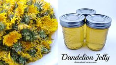 Dandelion jelly is simply amazing! Try this easy recipe that tastes just like honey with a hint of lemon.