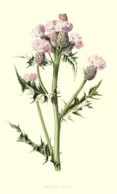 1879 v.3 - Familiar wild flowers figured and described by F. Edward Hulme - By Frederick Edward Hulme, 1841-1909 - via BHL