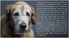Julie Reynolds Photography - Dogs - Seniors - Rescue - Love