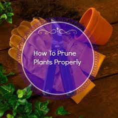 How To Prune Plants Properly - http://www.ambius.com/blog/how-to-prune-plants-properly/ - Greener on the Inside