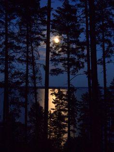 Full moon threw pines