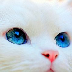 (notitle) - Adorable Cats and Cute Kittens - Katzen Cute Kittens, Cute Baby Cats, Cute Funny Animals, Cute Baby Animals, Funny Cats, Pretty Cats, Beautiful Cats, Animals Beautiful, Pretty Kitty