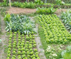 Per far sì che il terreno mantenga la sua fertilità e produca sempre di più, è importante eseguire la rotazione delle colture. Ma in che cosa consiste?