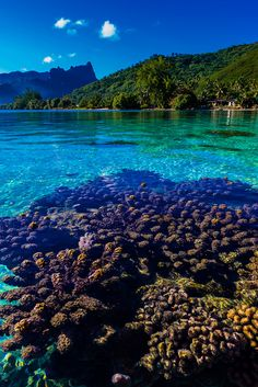 Island of Moorea, French Polynesia ✯ ωнιмѕу ѕαη∂у