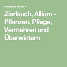 Zierlauch, Allium - Pflanzen, Pflege, Vermehren und Überwintern