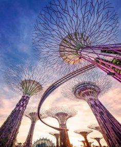 Gardens by the Bay Singapore - didn't see this when I went but definitely next time!