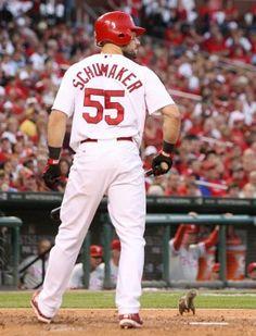 Check out the new Fox ad for postseason baseball. Cardinals Players, Cardinals Baseball, St Louis Cardinals, New Fox, Best Fan, National League, Basketball Hoop, Great Team, The St