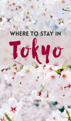 Enjoy the pretty colors of spring in Japan - at budget prices! Here are the best budget stays in Tokyo.