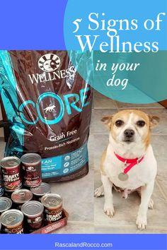 5 Signs of Dog Health #WellnessPet | Rascal and Rocco | Bloglovin'