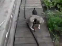 cat is taken to home / кота несут домой