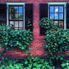 """Note to self: grow copious amounts of #nasturtium in all of my windows"""