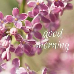 Good Day Quotes: Good Morning image with pink flowers - Quotes Sayings Good Morning Handsome, Good Morning Picture, Good Morning Good Night, Morning Greetings Quotes, Good Morning Messages, Good Morning Wishes, Morning Texts, Morning Post, Happy Morning