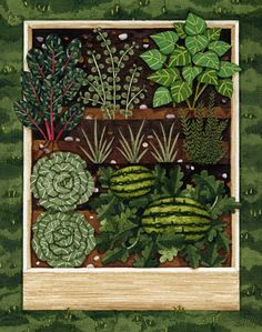 Patch, Victory Garden, Raised Vegetable Beds, Garden Art, x Art Print Vegetable Patch 8 x 10 Print. by Adrienne LangerVegetable Patch 8 x 10 Print. by Adrienne Langer Garden Drawing, Garden Painting, Garden Art, Vegetable Illustration, Garden Illustration, Vegetable Bed, Home Vegetable Garden, Vegetable Drawing, Arte Country