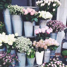 pinterest ↠ @Aaliyah_Nichole❁ Flowers