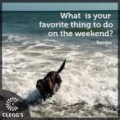 What is your favorite thing to do on the weekend?  #pestcontrolservice #pestcontrol #pest #bugs #insects #bedbugs #bedbugdog #dogs #dogslife #dogstagram #dogsofinstagram #dogsrule #follow #instagood #instafollow #awesome #northcarolina #northcarolinaliving #carolinas #dogmom #doglover #labrador #labsofinstagram #carolinamom #love #happy #smile #fun