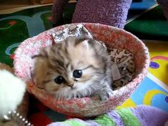 Most Innocent Kitten Alive | The Animal Rescue Site Blog