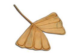 Hoja de Ginkgo Biloba esculpida en madera de guanacaste o machiche.