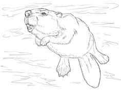 swimming-beaver