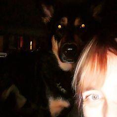 Demon dog #dogs #GSD #GermanShepherd #GermanShepherdDog #mrdarcy #darcy